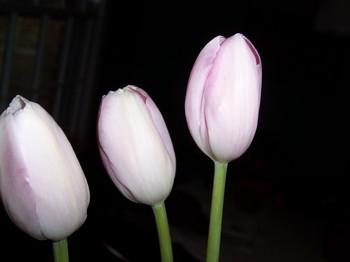 Pink003